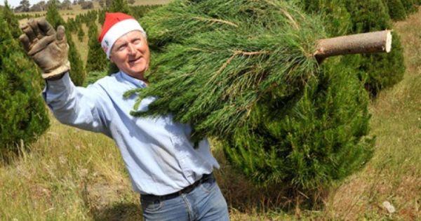 Ziggy Kominek Santa S Shaped Christmas Trees Gundaroo Flower Farm Christmas Christmas Tree