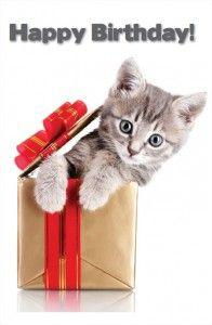 Stupendous Happy Birthday Cat With Images Happy Birthday Cat Happy Personalised Birthday Cards Epsylily Jamesorg
