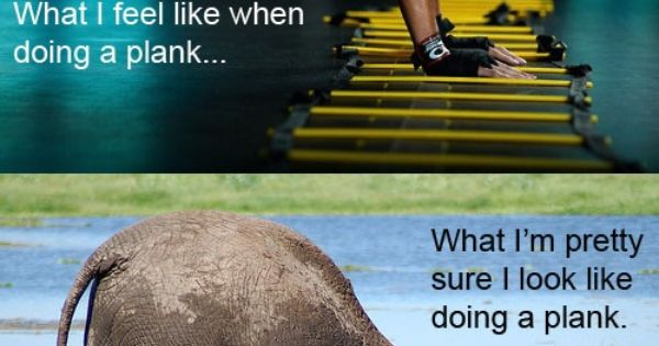 plank humor. So true ;)