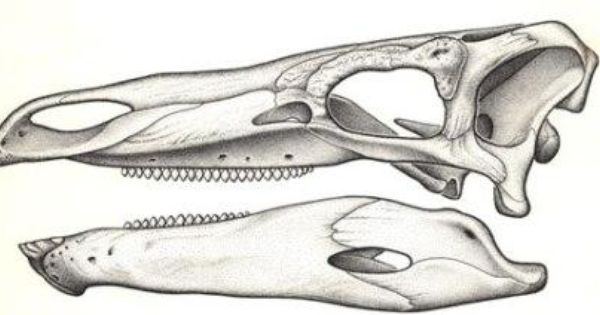 Find A Missing Dot Bone Tattoo Skeleton Art Stegosaurus Dissertation Upon Roast Pig Summary