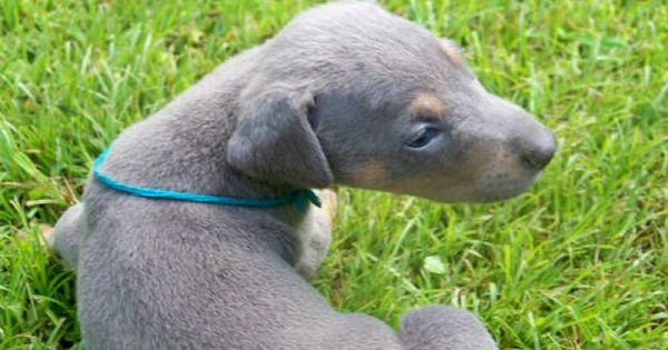 Bird Dogs For Sale In Ky