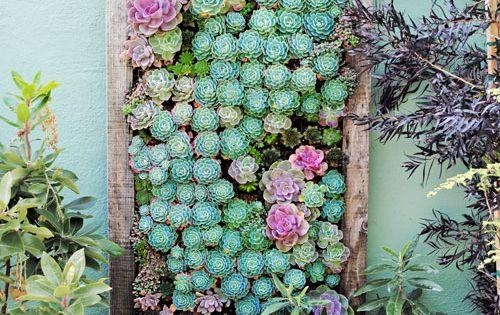 Vertical Gardening Ideas. Succulent Wall Garden