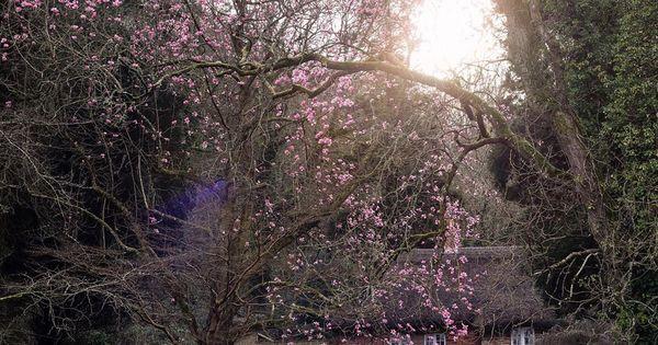 Polubienia 1 093 Komentarze 58 Aimee Twigger Twiggstudios Na Instagramie It Is Always Safe To Dream Of Spring Natural Homes House In The Woods Tree