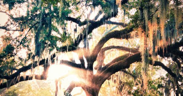 City Park New Orleans Lorraine's Tree of Life