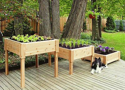 Garden planter boxes - Table Garden Design: How To Build Table Garden Boxes - When