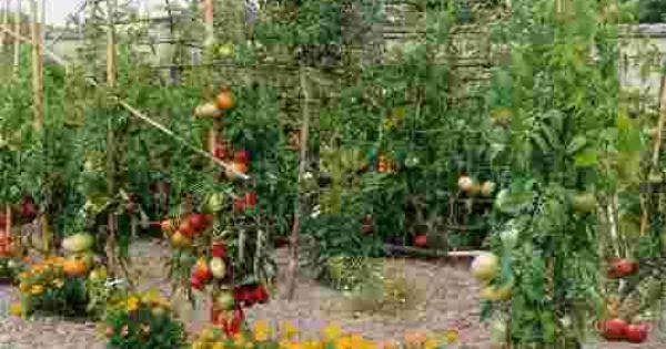 Comment cr er son premier jardin potager en 7 points for Blog jardin potager