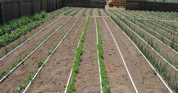 Designing A Basic Pvc Home Garden Drip Irrigation System Very Good Pdf On Layout Hole Size Spaci Garden Watering System Drip Irrigation Irrigation System