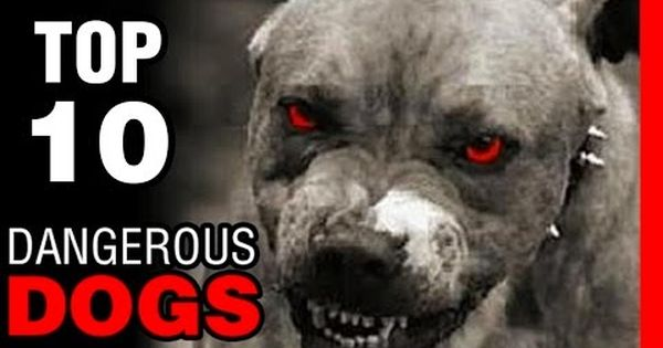 10 Most Dangerous Dogs Breeds In The World Youtube Dangerous Dogs