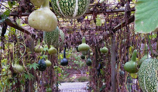 unique vegetable garden ideas | Enchanted Garden: Grow A Hanging Vegetable Arbor