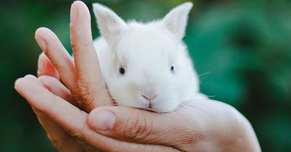 Sweet, baby bunny