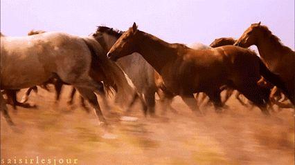 Lynn Morris Google Wild Mustangs Pretty Horses Beautiful Horses