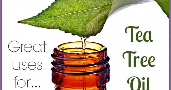Today at aromatherapy adventures we 39 re getting excited about tea tree oil what do you use it - Fir tree syrup recipe and benefits ...