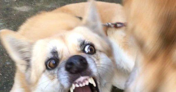 ป กพ นโดย Cltmnw ใน ม มน องหมา ตลกๆ หมา ร ปตลก ตลก