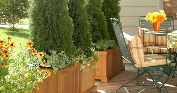 create a secluded haven on your deck by planting small trees in containers to block the view of