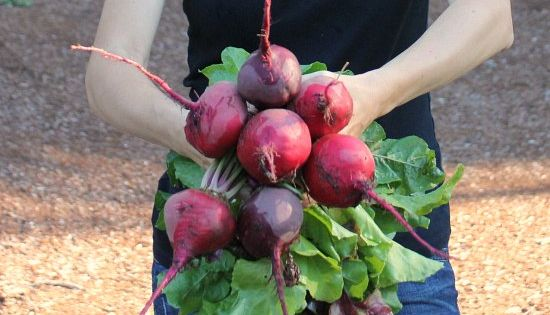 How To Grow Beets Start To Finish Garden Root Crops Pinterest Raised Beds Early Spring