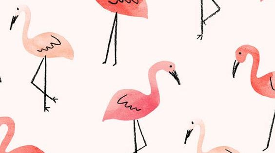 Citaten Zomer Android : Iphone or android flamingos background wallpaper selected