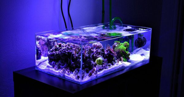 N R Official Shallow Reef Thread Post Fts Link To Yours
