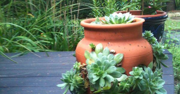 Hens Amp Chicks In A Strawberry Pot Gardening Pinterest