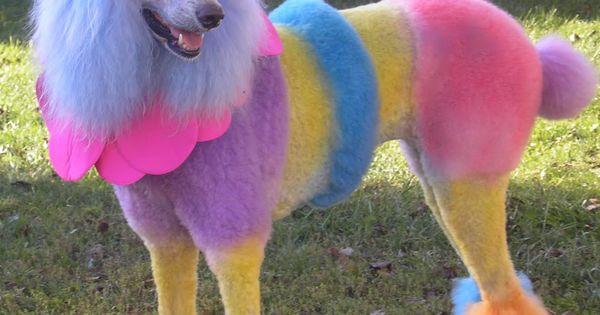 ☆ Rainbow poodle ☆