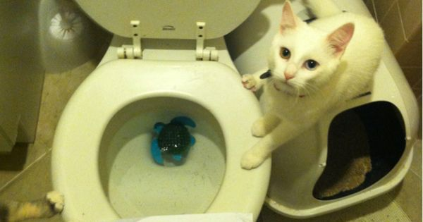 Everytime The Toilet Seat Is Up I Have To Throw My Turtle
