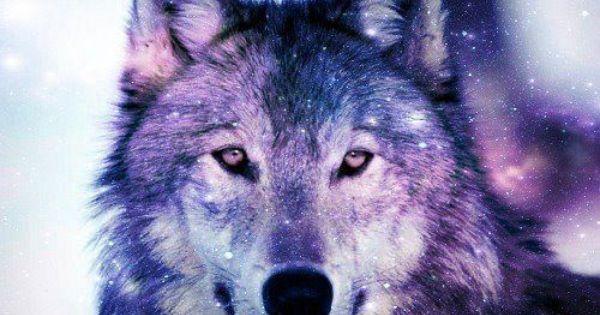 Elegi Tu Animal Https Www Facebook Com Pages Nima 221501881297298 Www Nimacordoba Tumblr Com Galaxy Wolf Wolf Spirit Animal Wolf