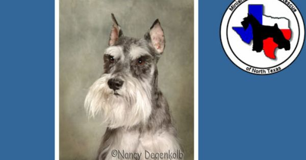 Miniature Schnauzer Rescue Of North Texas 300 Adoption Schnauzer Dogs Pets Schnauzer Puppy