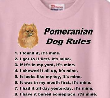 Adult Hoodie Pomeranian Lovers Gifts For Woman Men Girls Boys Tee Shirt