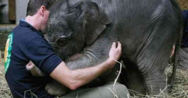 This Baby Asian elephant greets her keeper at Munich's Hellabrunn Zoo! Wouldn't