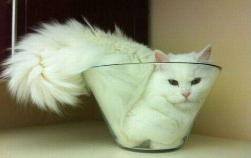 white flower | via tumblr. Silly cat