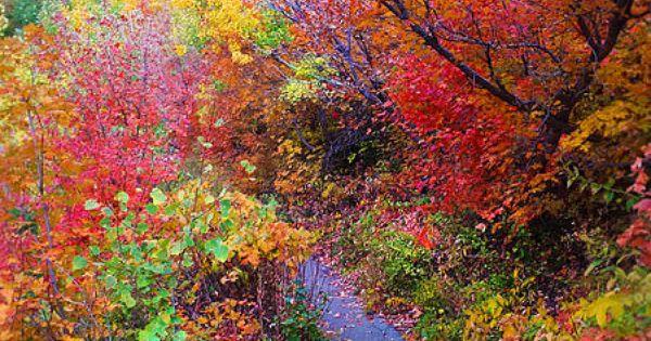 ✯ Autumn Walk - Mt Timpanogos, Utah ** This Road Is Full
