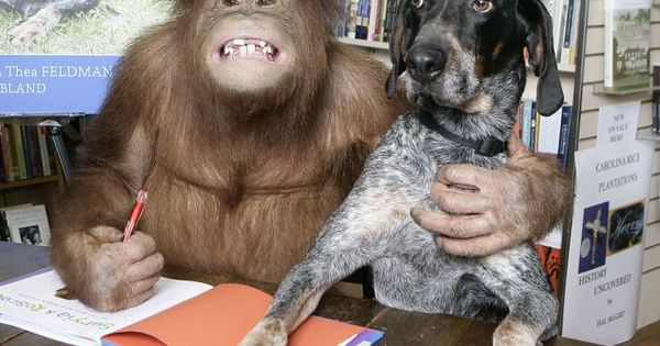 Friendship between a Monkey and a Dog, reading buddies!