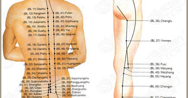 Acupuncture Point Ub 54 – Wonderful Image Gallery