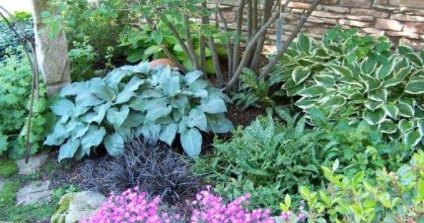Perfect Colorful Shady Garden Combo Blue Hosta Black Mondo