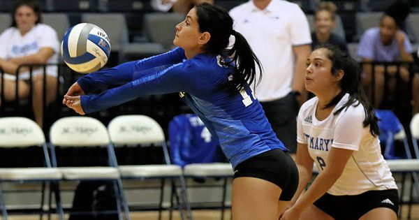 Stmu Volleyball Defeated Newman Jets Athlete Volleyball Rattlers