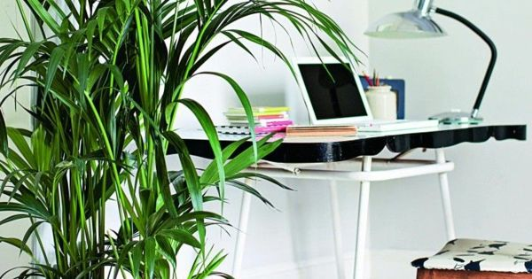 welche zimmerpflanzen brauchen wenig licht zimmerpflanzen pinterest green office plants. Black Bedroom Furniture Sets. Home Design Ideas