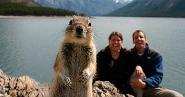 Funny Animals Photo bomb