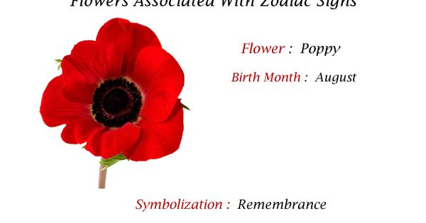 The Poppy Is The Birth Flower For Those Born In The Month