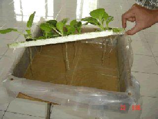 Cara Membuat Hidroponik Rakit Apung Untuk Skala Rumah Tangga Bak Tanaman Hidroponik Petani