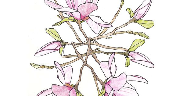 line drawing microline & colored pencil flowers