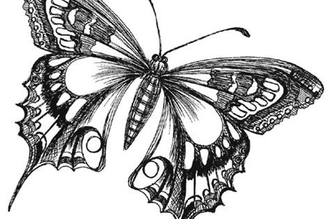 I Want This On The Back Of My Neck Butterfly Drawing Images Butterfly Sketch Butterfly Drawing