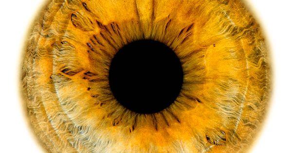 Windows To The Soul Iris Gallery Edouard Janssens Eye Art Doll Eyes Eye Texture