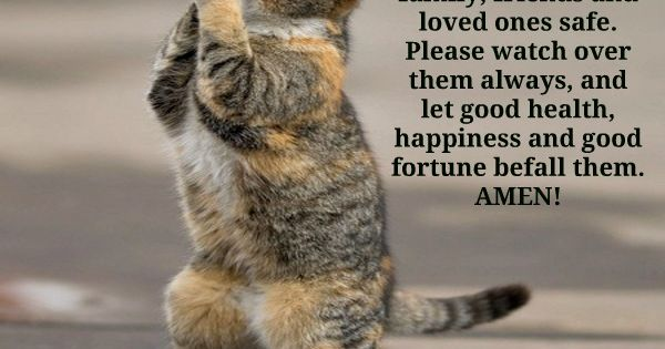 ♥cats love the Lord
