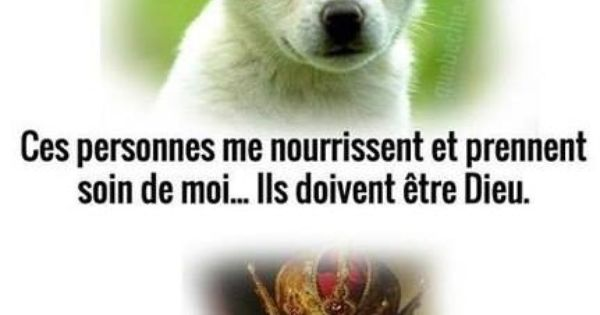 Diff Rence Entre Le Chien Et Le Chat French Silliness