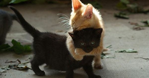 Best Friend Kittens Love Black Cats!