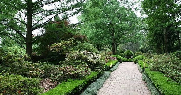 Boxwood planting plant although it seems easy to for Easy to maintain bushes