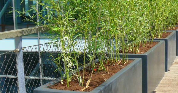 Bamboe in composiet dakterras pinterest bamboe bakken en zoeken - Bamboe in bakken terras ...