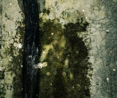 Servicemaster By Pwf 24 7 Believes That A Clean Place Is A Safe Place To Live And We Will Help You Achiev Mold Remediation Pinellas County Florida Mold Remover
