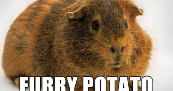 Furry potato Derpy Animal Names Pinterest Animal