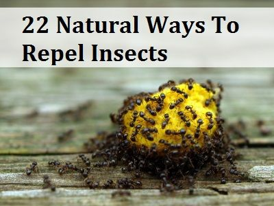 31 Natural Tricks To Repel Pesky Bugs Amp Insects Insects