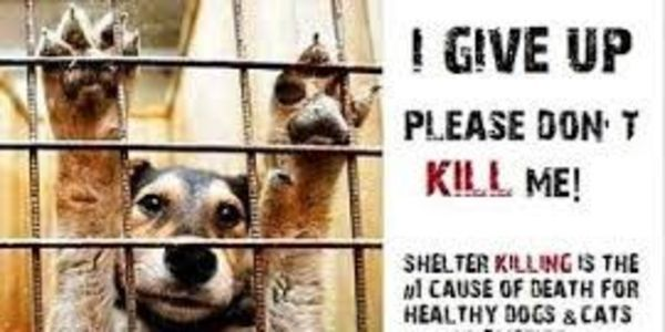Petitie Stop Hawaii Humane Society Euthanizing Adoptable Animals No Kill Animal Shelter Animal Shelter Animals